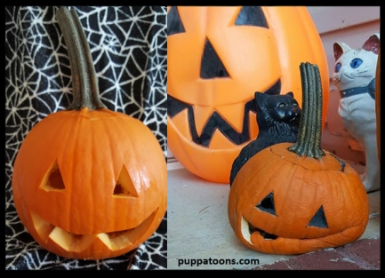2917 Pumpkin After and after.jpg